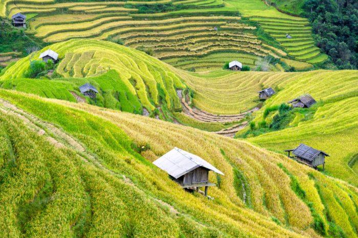 Studietur til Vietnam