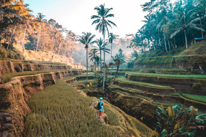 Rejse til Indonesien