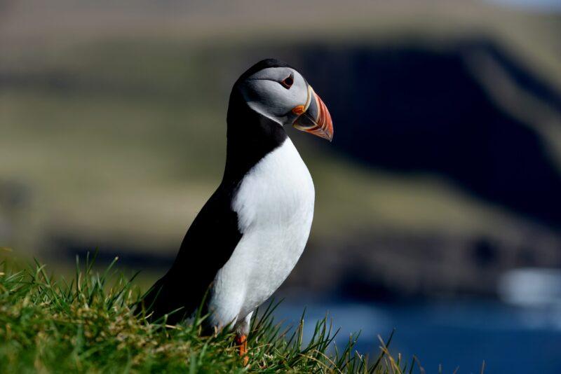 Rejse til Færøerne